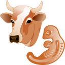 Cow Embryo Emoticon