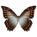Morpho Theseus Amphotrion Emoticon