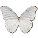 Morpho Polyphemus Emoticon