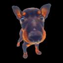 Puppy 8 Emoticon
