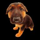 Puppy 6 Emoticon