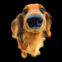 Puppy 4 Emoticon
