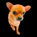 Puppy 3 Emoticon
