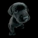 Puppy 2 Emoticon