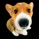 Puppy 10 Emoticon