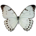 Morpho Luna Male Emoticon