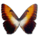 Morpho Hecuba Sunset Emoticon