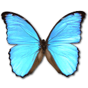 Morpho Didius Emoticon