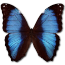 Morpho Deidamia Erica Emoticon