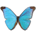 Morpho Absoloni Emoticon