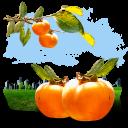 Fruits Persimmon Emoticon