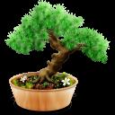 Bonsai Emoticon