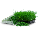Wheatgrass Tray Bag Emoticon