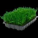 Wheatgrass Tray Emoticon