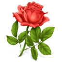 Rose Emoticon