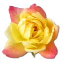 Rose Yellow 2 Emoticon