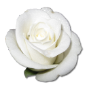 Rose White 1 Emoticon