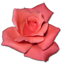 Rose Coral Emoticon