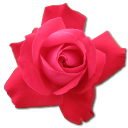 Rose Cerise Emoticon