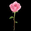 Rose Emoticon