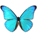 Morpho Rhetenor Cacica Emoticon