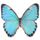 Morpho Portis Male Emoticon