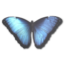 Morpho Peleides Emoticon
