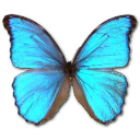 Morpho Godarti Emoticon