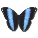 Morpho Achilles Emoticon