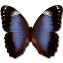 Morpho Achilleana Emoticon