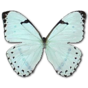 Mint Morpho Emoticon