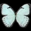 Mint Morpho Emoticon