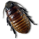 Caca Roach Emoticon